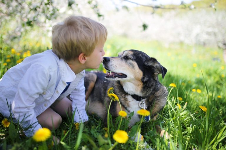 young boy pet owner and dog playing